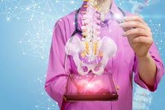 Ein Physiotherapeut, der mit dem künstlichen Dornmodell hängt über einer Tablette funktioniert lizenzfreies stockbild
