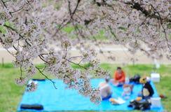 Ein Picknick (Unschärfestimmung) unter schönen Kirschblüten auf Wiesen durch Sewaritei-Flussbank in Yawatashi, Kyoto Stockbild