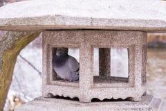 Ein pidgen in einer Steingartenverzierung lizenzfreie stockfotos
