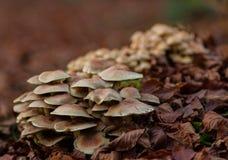 Ein Pilz auf einer Schicht Blättern Lizenzfreies Stockbild