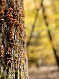 Ein Pilz-beladener Baum in Cleveland MetroParks - dem PARMA - dem OHIO stockbilder