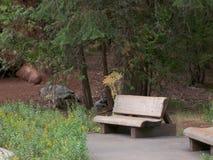 Ein Platz im Wald lizenzfreie stockbilder