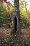 Ein Platz, zum sich in der Naturhöhle zu verstecken stockfotos