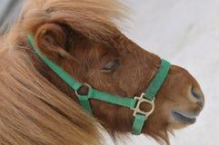 Ein Pony lizenzfreie stockfotografie