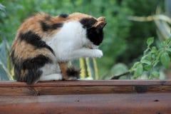 Ein Porträt einer netten flaumigen Katze Lizenzfreie Stockfotos