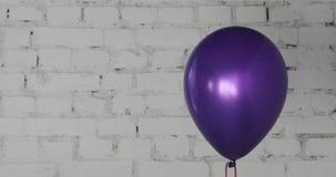 Ein purpurroter Ballon auf bricky weißem Wandhintergrund stock footage