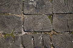 Ein Querschnitt des Stammes eines alten Baums vektor abbildung