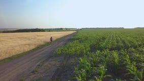 Ein Radfahrer reitet entlang die Straße zwischen landwirtschaftliche Felder stock video footage