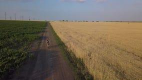 Ein Radfahrer reitet entlang die Straße zwischen landwirtschaftliche Felder stock video