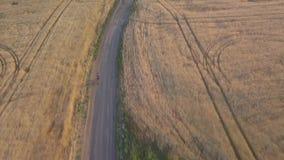 Ein Radfahrer reitet entlang die Straße zwischen landwirtschaftliche Felder stock footage