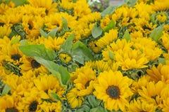 Ein Rahmen gefüllt mit Sonnenblumen Stockfoto