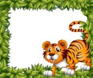 Ein Rahmen mit einem Tiger Stockbild