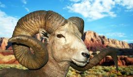 Ein RAM an den Vermilion Klippen Stockfotografie