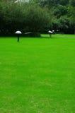 Ein Rasen stockfotos