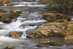 Ein rauchiger Gebirgsnationalpark-Strom im North Carolina Stockfotografie
