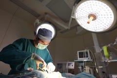 Ein Raum der tierärztlichen Chirurgie in Kraft Lizenzfreie Stockfotografie