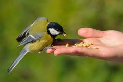 Ein realer Vogel in der Hand Lizenzfreies Stockfoto