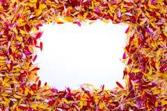 Ein Rechteck innerhalb der Blumenblätter Lizenzfreie Stockfotografie