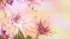 Ein Regenbogen von Blumen Stockbild