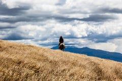 Ein Reiter reitet in Richtung zum Horizont lizenzfreie stockbilder