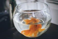 Ein reizender kleiner goldener Fisch lizenzfreies stockbild