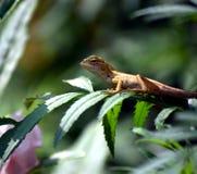 Ein Reptil auf einem Baum Stockbilder