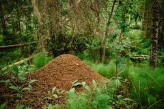 Ein riesiger Ameisenhaufen errichtet durch eine Waldameise Murovenik im Wald lizenzfreies stockfoto