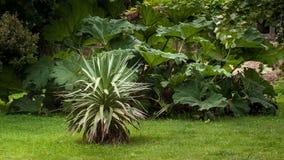 Ein riesiger Rhabarber und eine Agave in einem französischen Garten lizenzfreies stockbild