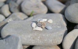 Ein Ring von Kieseln und von kleinem Oberteil schließt auf einem großen Stein Fensterläden Stockfotografie
