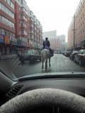 Ein ritt ein Pferd in der Straße stockfotografie