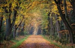 Ein romantischer Herbst feenhaft voll von den Farben, vom Komfort und von der Ruhe Ein schöner Platz für einen ruhigen Weg Stockfotos