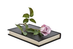Ein rosafarbenes stieg, liegend auf einem Buch. stockbild