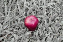 Ein roter Apfel auf Schwarzweiss-Grashintergrund Stockfotografie