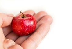 Ein roter Apfel des kleinen Paradieses in der Palme Ihrer Hand Habsucht, zum kleines zu geben, lizenzfreie stockbilder