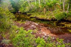 Ein roter Fluss in einem Dschungel Stockbild