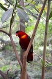 Ein roter Papagei Lizenzfreies Stockfoto
