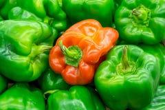 Ein roter Pfeffer in den grünen Paprikas Stockfoto