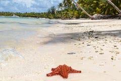 Ein roter Starfish Stockbild