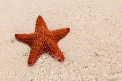 Ein roter Starfish Lizenzfreies Stockbild