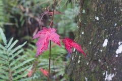 Ein rotes Blatt in einem Wald lizenzfreies stockbild