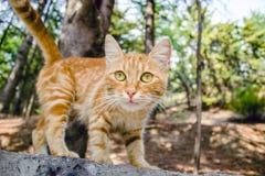Ein rotes Kätzchen am sonnigen Tag Stockfoto