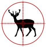 Ein Rotwild in einem Ziel Stockbild