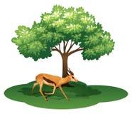 Ein Rotwild unter dem Baum stock abbildung