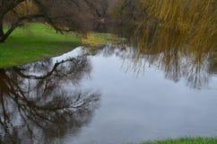 Ein ruhiger Fluss im Spätherbst mit einem grünen Rasen und einer Weide verzweigt sich Stockfotografie