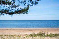 Ein ruhiger Hintergrund der Ostseeküste, Kiefernniederlassung und ein Sand stützen am sonnigen Tag des Sommers unter Stockfotografie