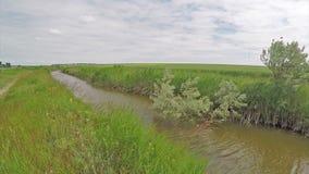Ein ruhiger kleiner Fluss unter dem Sommer stock footage