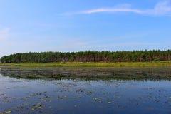 Ein ruhiger See auf einem Hintergrund des Kiefernwaldes Stockbild
