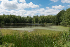 Ein ruhiger Teich im Wald Lizenzfreie Stockfotos