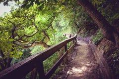 Ein ruhiger Weg durch das Holz Stockfotografie