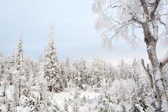 Ein ruhiger Winter gefrorener Wald stockfotografie